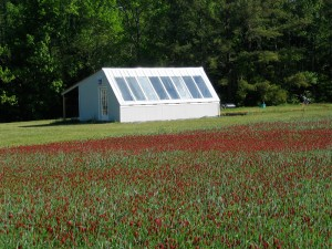 Clover cover crop at Granite Springs Farm. Photo by Meredith Leight.