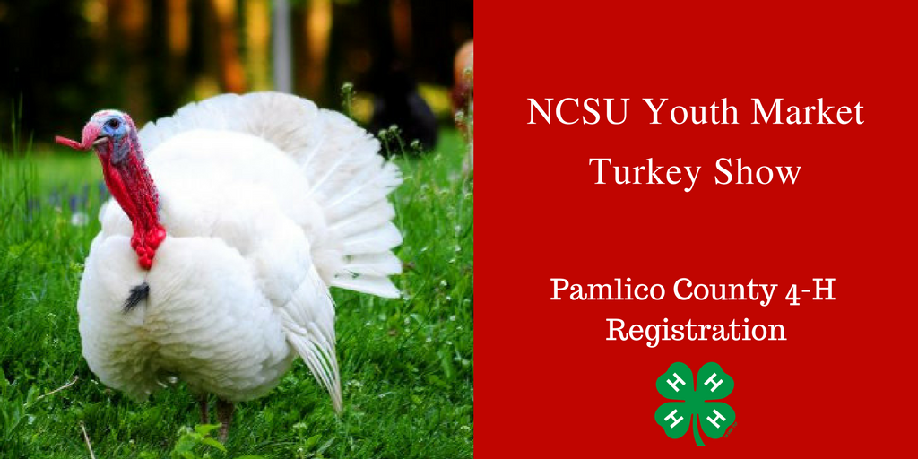 NC State Youth Market Turkey Show