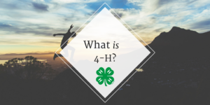 Cover photo for What Is 4-H?