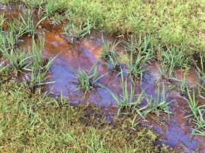 Photo of natural sheen in ditch.