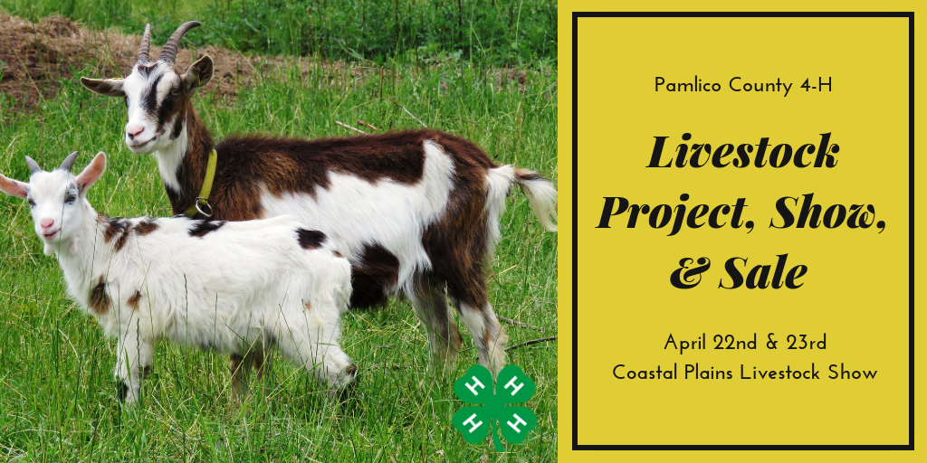A Graphic for the Youth Livestock Project. A photograph of two goats in a field with a 4-H Clover. Reading: Pamlico County 4-H Livestock Project, Show, & Sale April 22nd & 23rd Coastal Plains Livestock Show