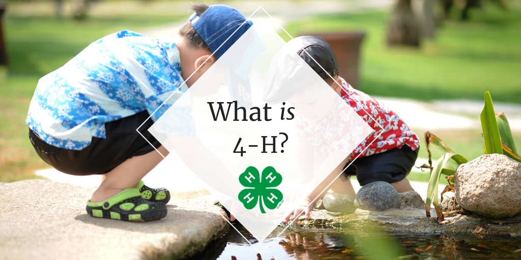 Banner Reading: What is 4-H? Pictured behind are two young boys playing in a park creek.