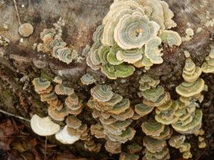 Fungi on a stump