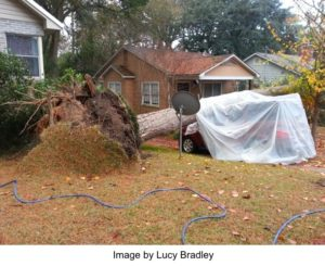 uprooted tree that has fallen on a car
