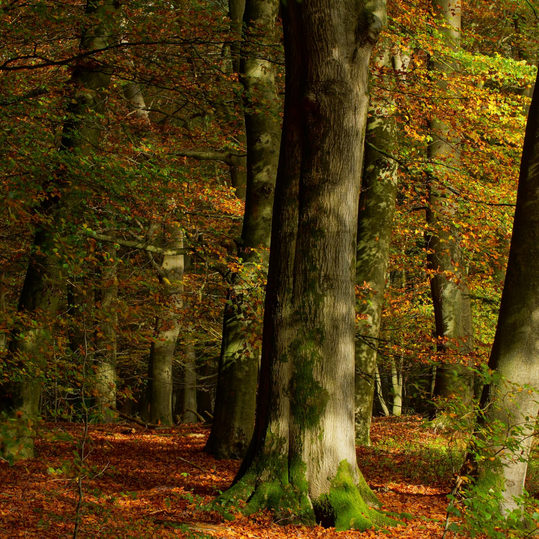 picture of forest in the fall