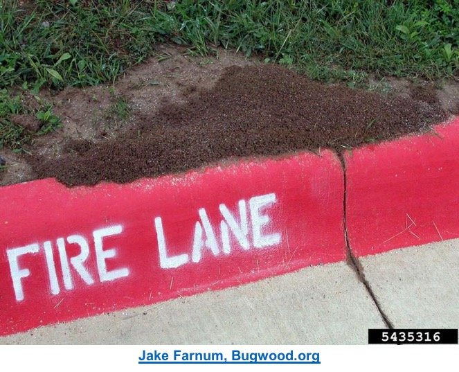 fire ant mount on a curb