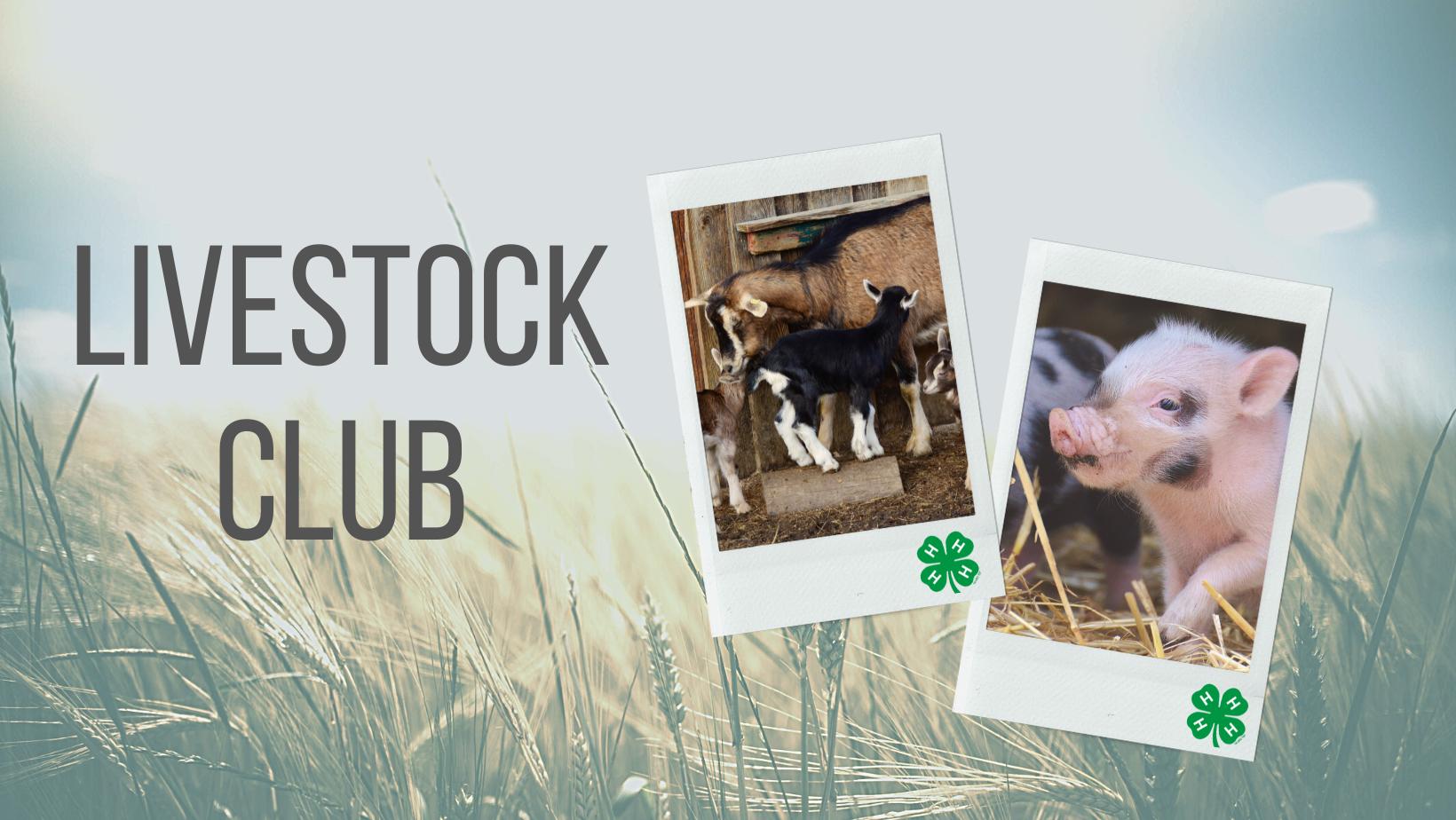 Livestock SPIN Club